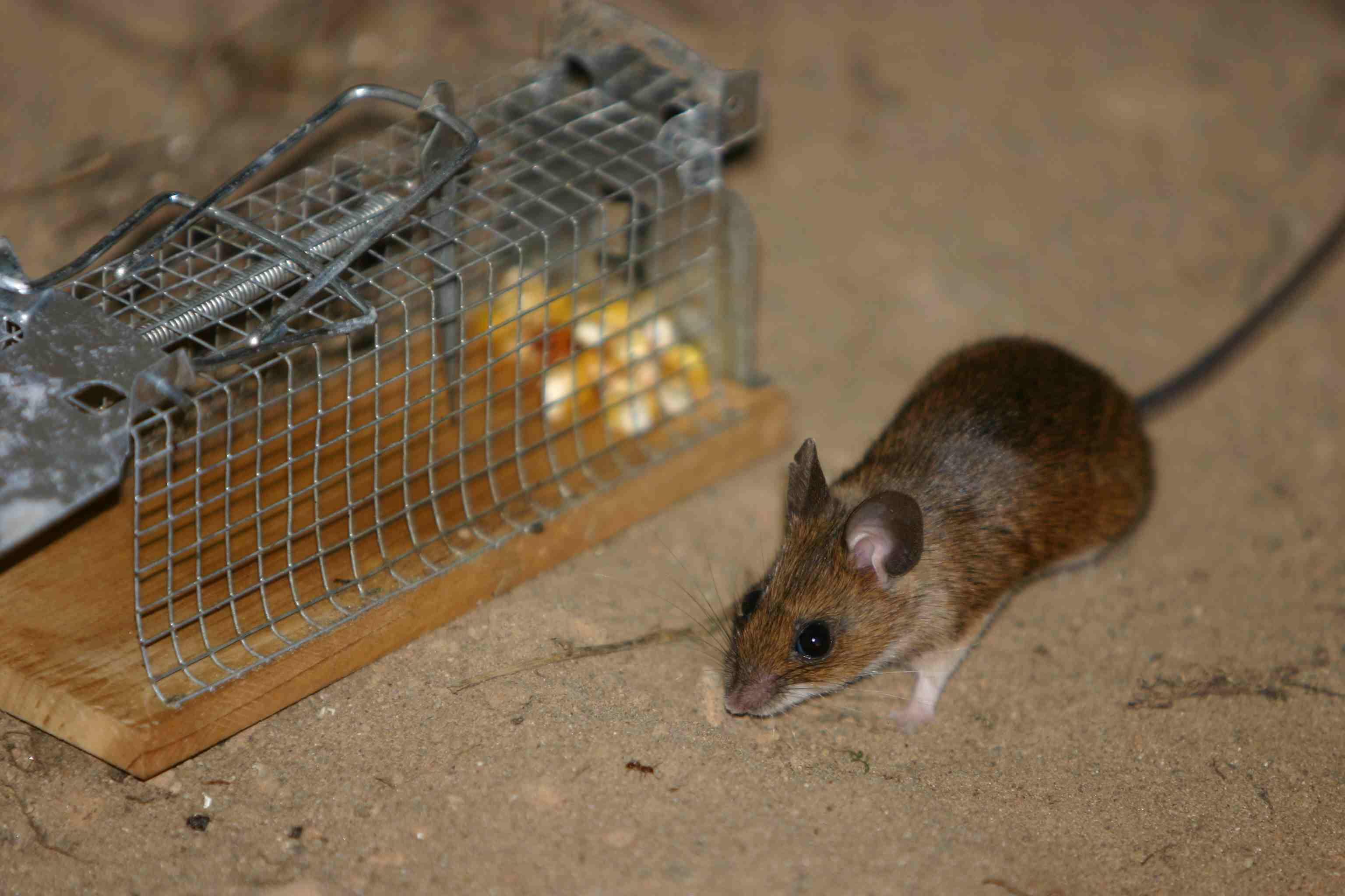 Mäuschen pass auf dich auf