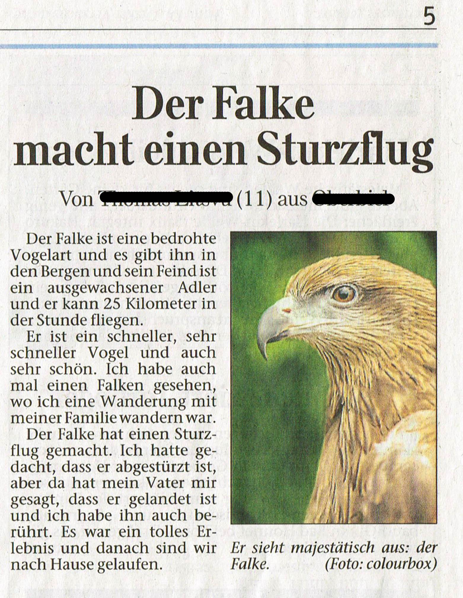 Falke Bussard-klein