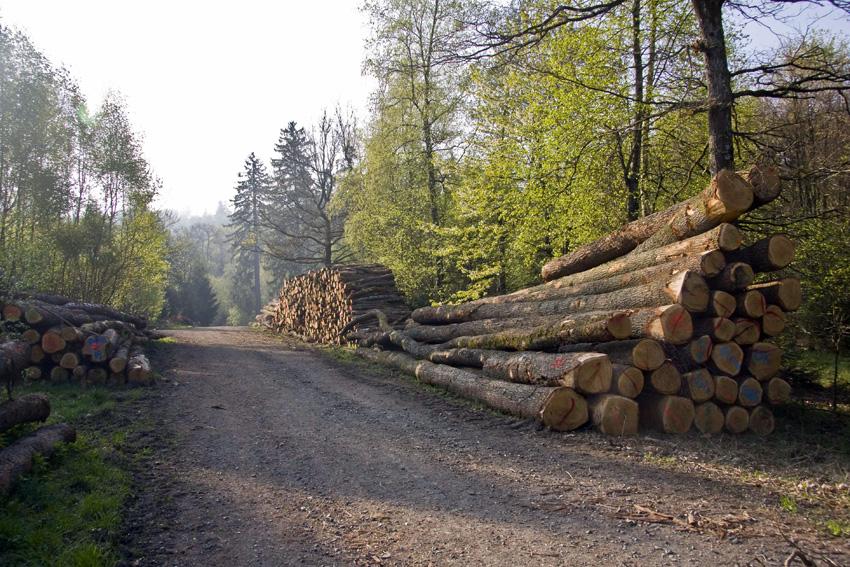 IMG_Holz 1-klein