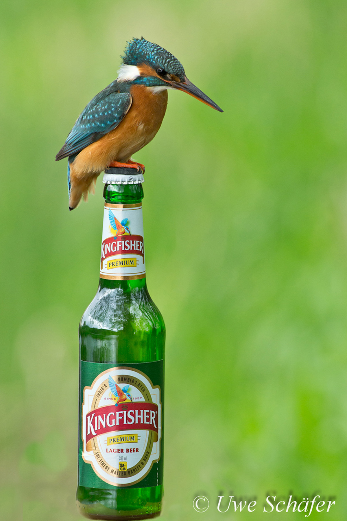 Eisvogel-Flasche-klein
