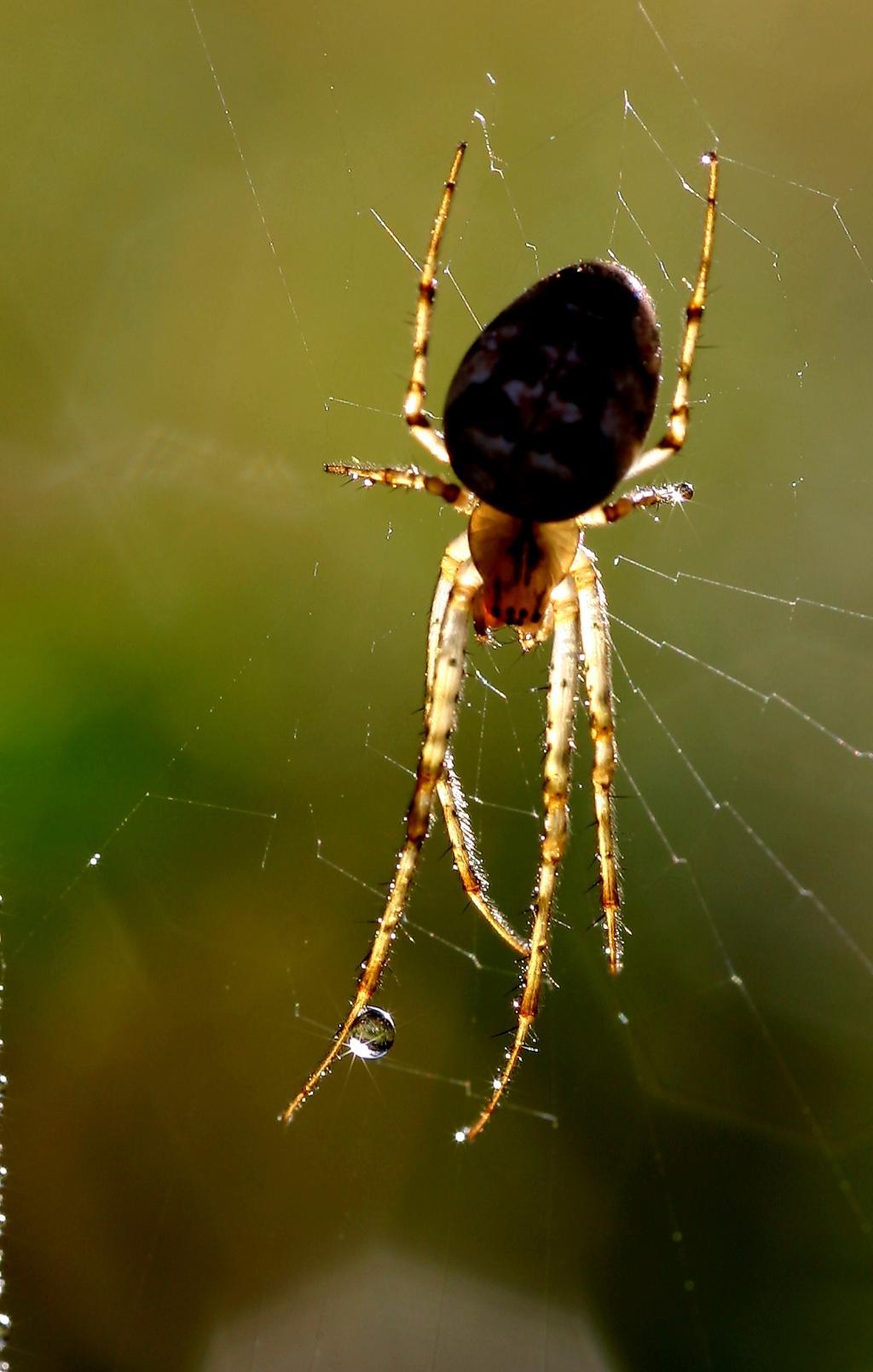 17 - Spinne im Gegenlicht