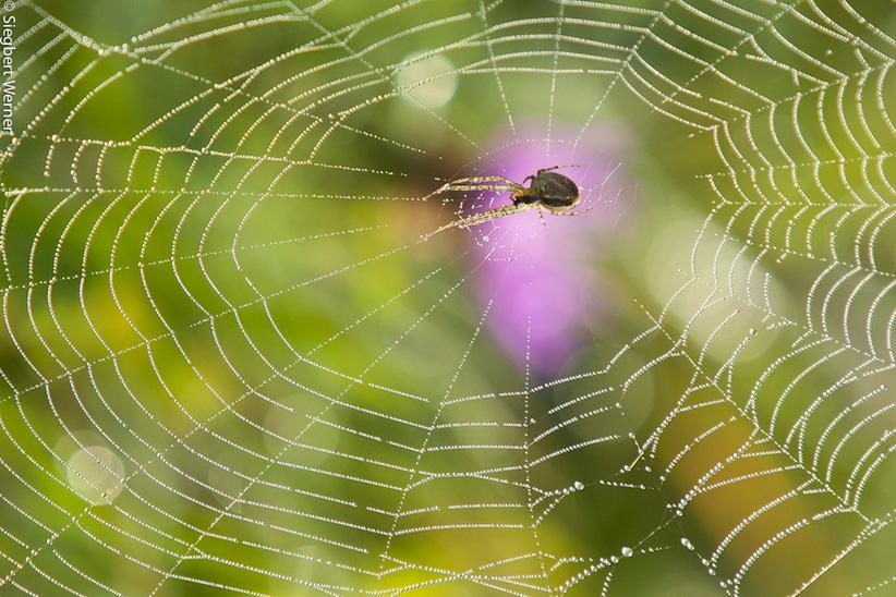 Spinnennetz20110929n-_Q8Q7029-klein