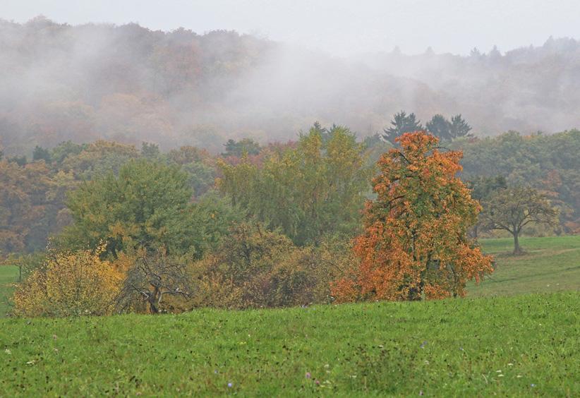 HerbstimDaubhFeld1-klein