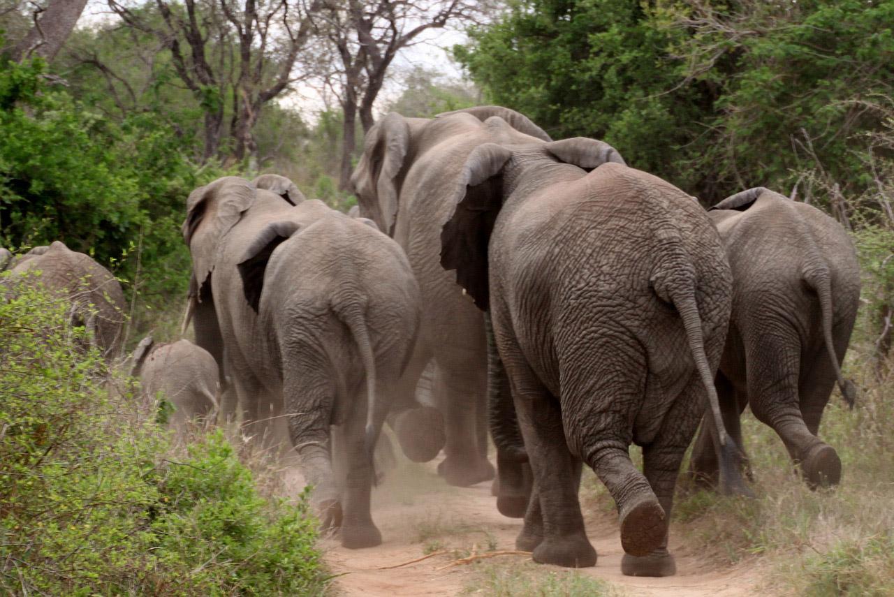 elephant-426990_1280-klein