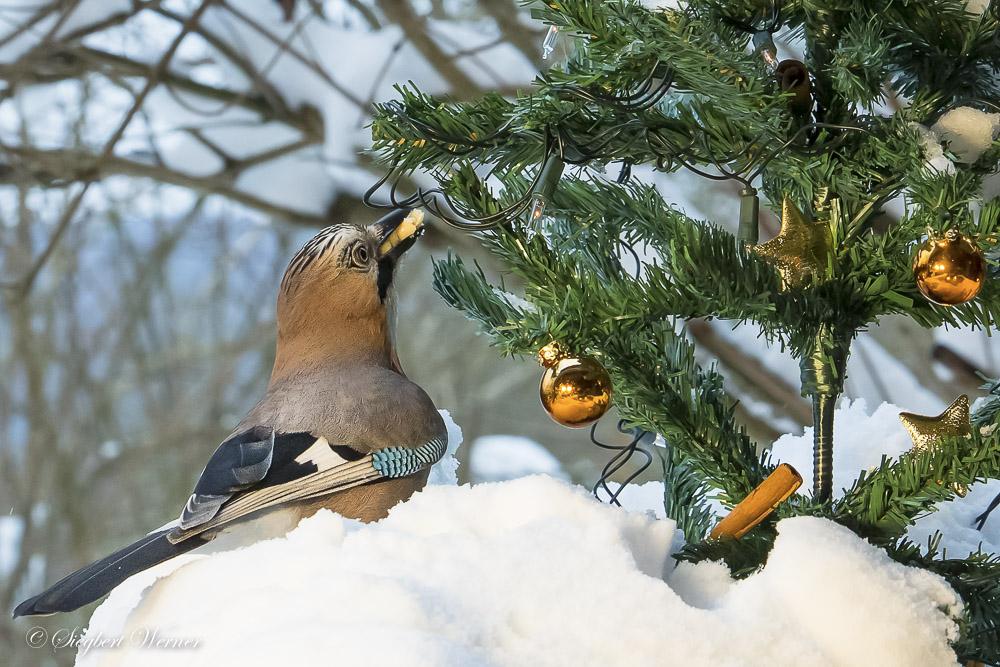 01-Vogelweihnacht - 1000 _W_M1412-Bearbeitet29. Dezember 2014