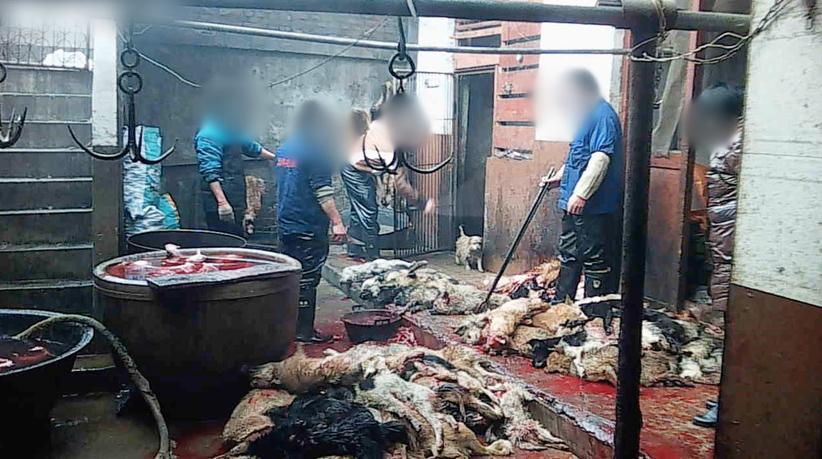 Klein-Hund-1-2014-Hundeleder-China-Standbild012-c-PETA-Asia
