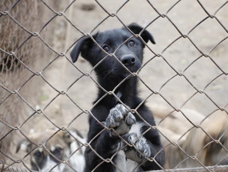 Strassenhunde in der Ukraine