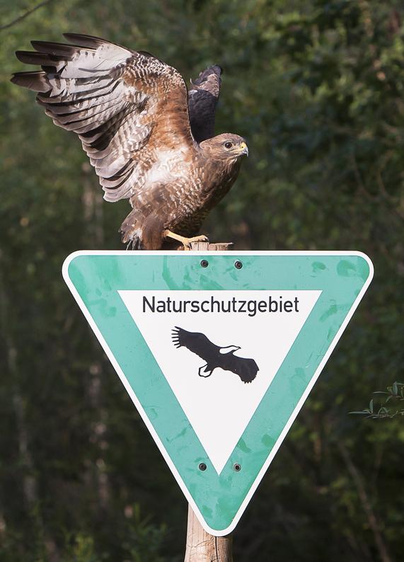 Lasst die Pfosten von den Vögeln-klein