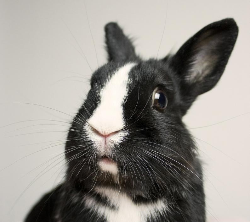 bunny--klein