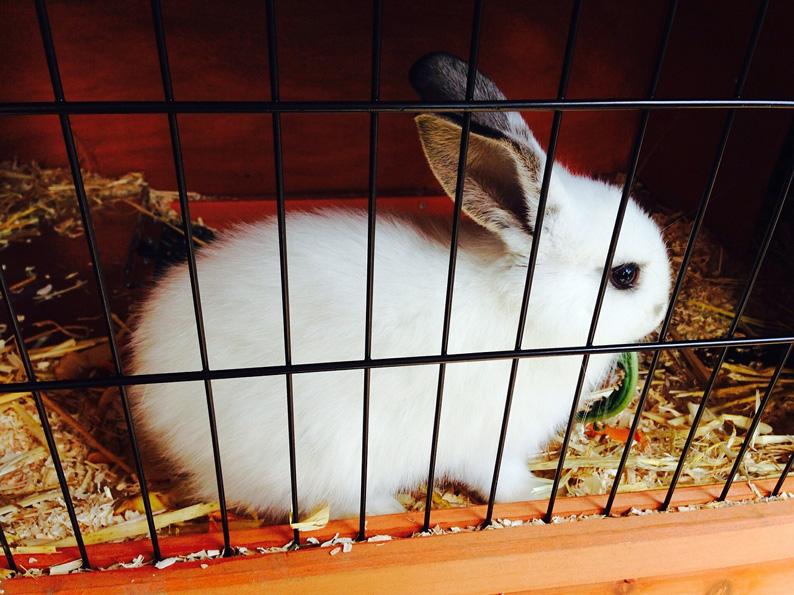 Kaninchen-klein