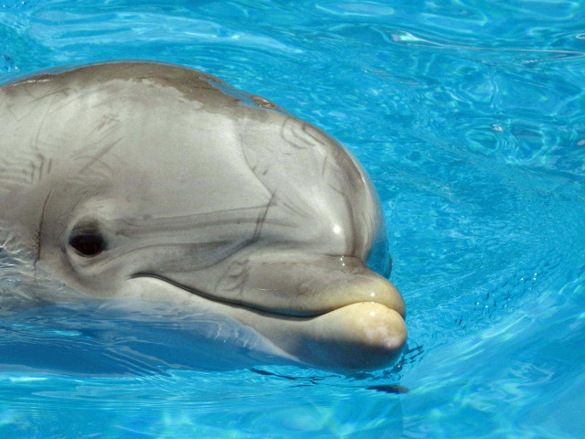 1-Delfin