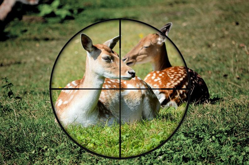 deer-klein
