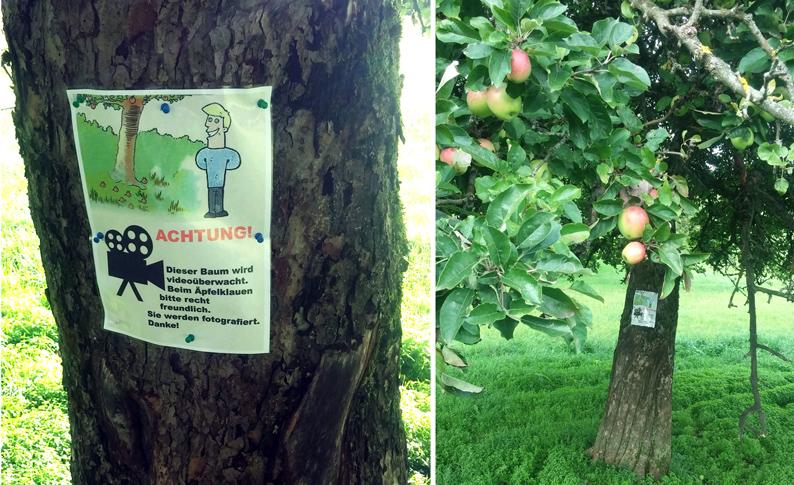 Apfelbaum-1-klein