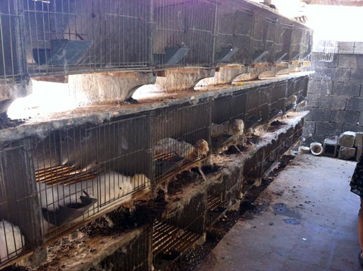 02-PETA_Asia_Angora_643-Angora-Cages_600