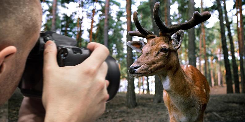 Fotograf-Hirsch-klein