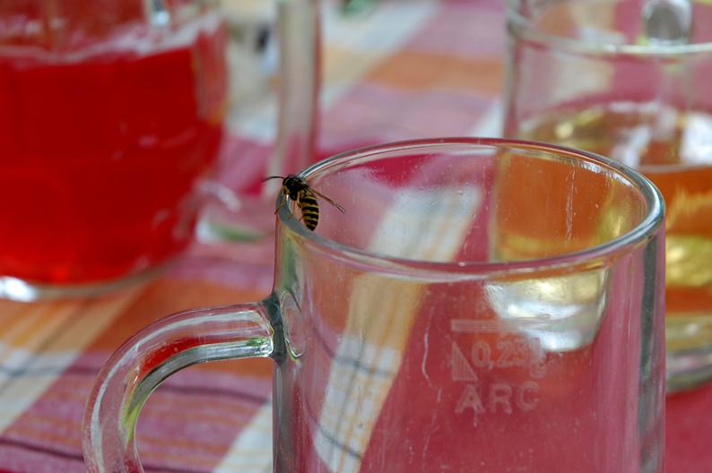 klein-Glas3527_original_R_K_B_by_rudolf ortner_pixelio