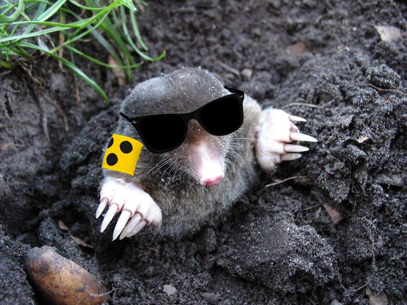 blinder-maulwur-klein