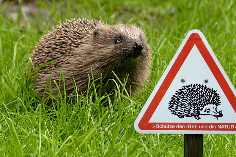 igel-2-klein-hedgehog-1376820_1280