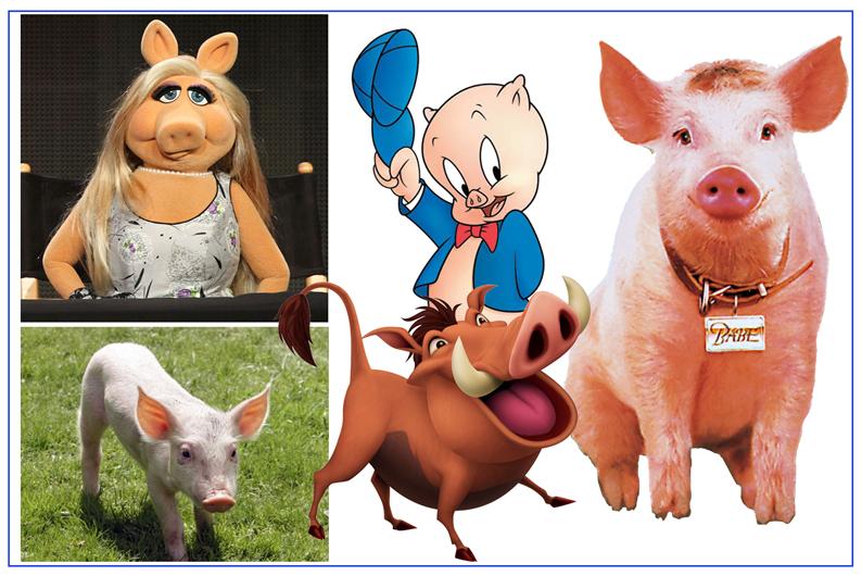 schweine-klein