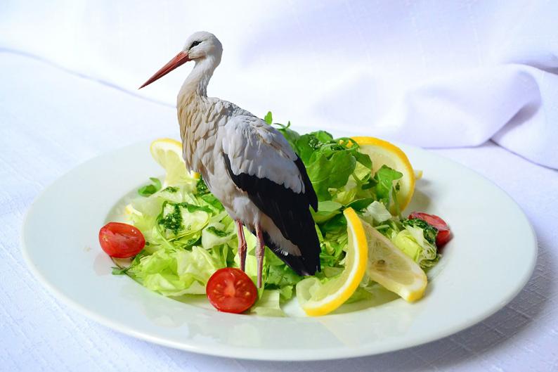 storch-im-salat-1-klein