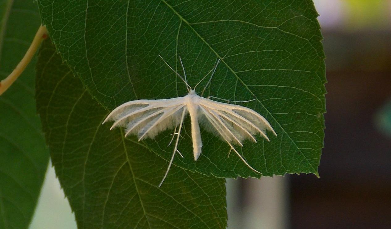 4-schlehe-butterfly-385374_1280