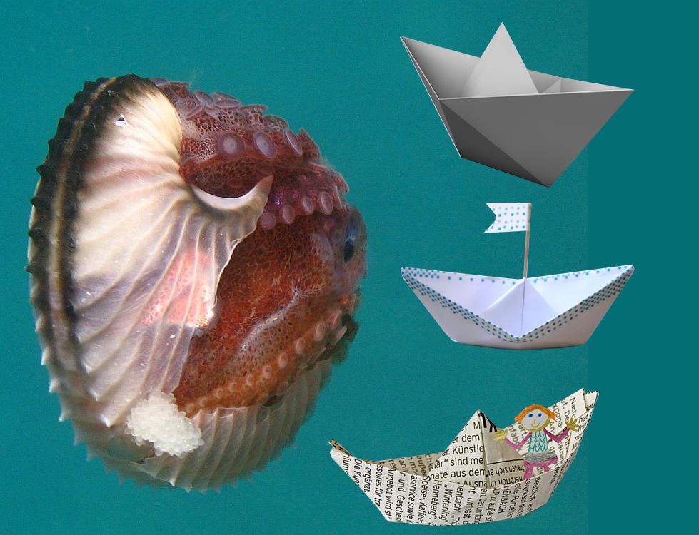 Papierboot_Argonauta_200705181139