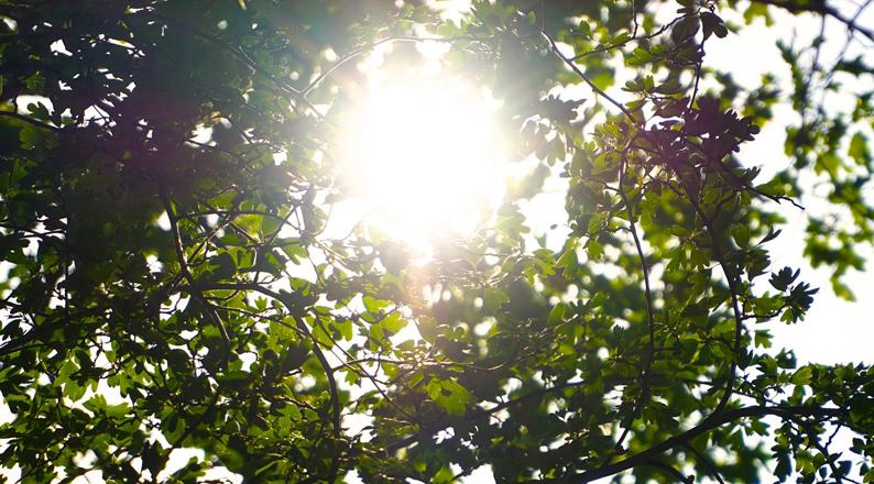 nature-1281565_1920