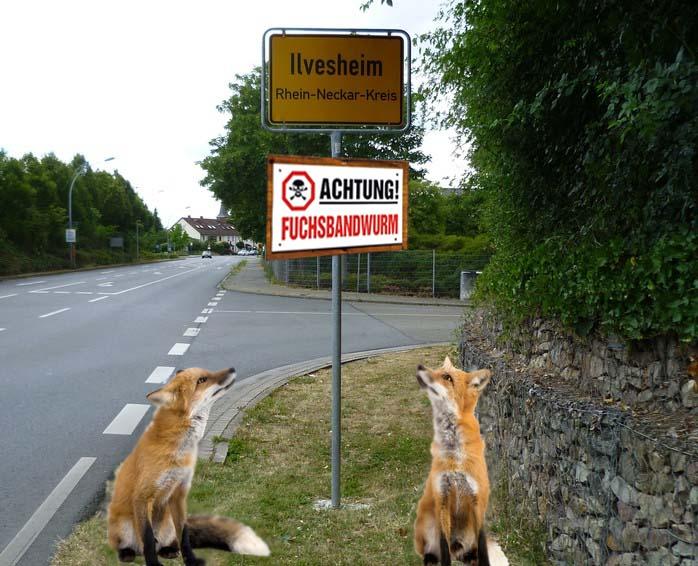 Fuchsschild