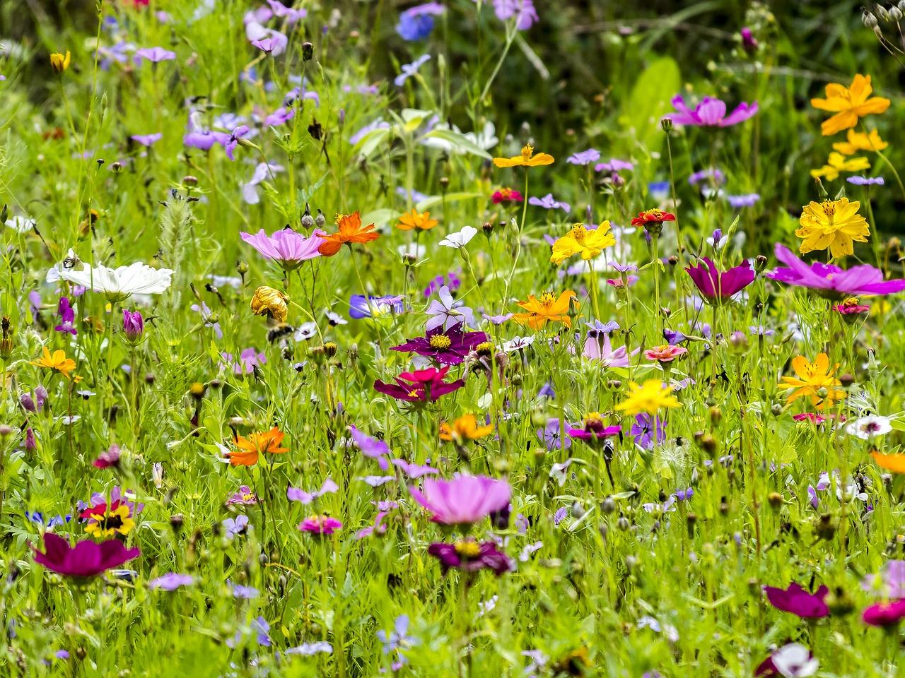 Blühendes Leben-flower-2397985_1280