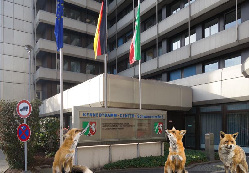 Ministerium-Füchse