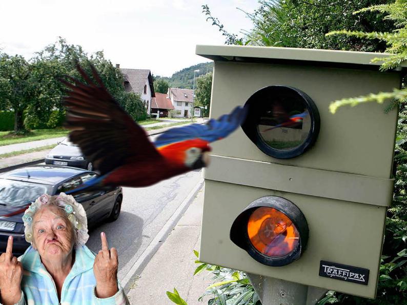 Papagei-Radar