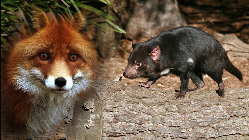 fox-pic-